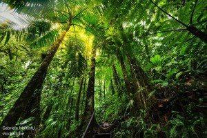 Амазонска тропическа гора / Amazon Rainforest